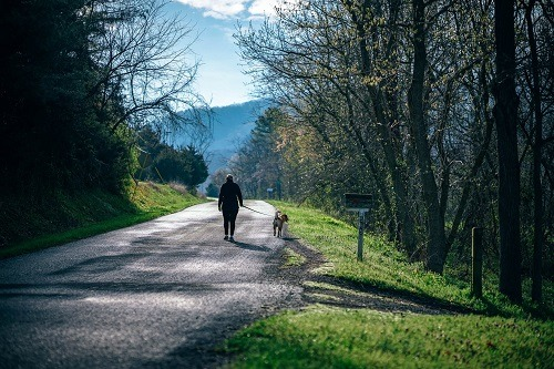 man walking with dog along country road